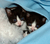 image of kittens named Summer and Chaplin